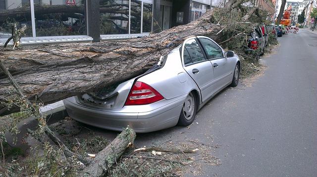 padlý strom na stromě